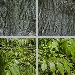 Lavalle Cork Trees photographs