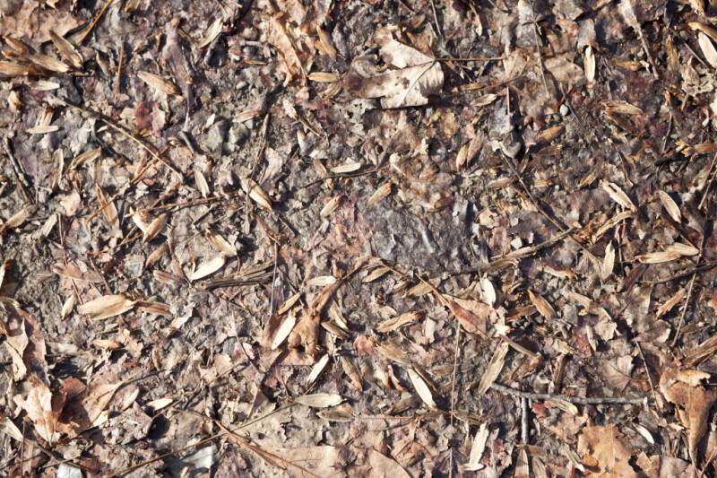 Leaves, Sticks, and Twigs on Ground at Boyce Park