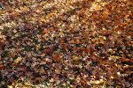 Leaves with Light Colors Covering the Ground at Evergreen Park