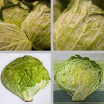 Lettuce photographs