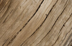 Light Colored Wood with Longitudinal Cracks