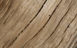 Light Colored Wood with Longitudinal Cracks