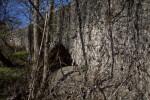Limestone and Overgrowth at the Espada Acequia