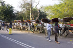 Line of Horse-Drawn Carriages