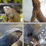 Lizards photographs