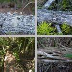 Logs photographs