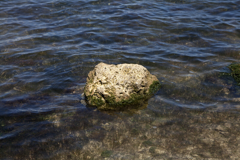 Lone Rock in Water with Algae Growing on its Underside