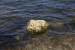 Lone Rock in Water with Algae Growing on its Underside