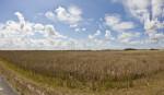 Long Field of Sawgrass