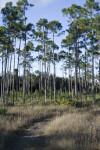 Long Pine Trail