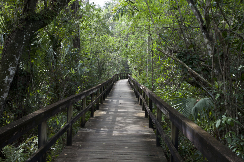 Long Section of the Big Cypress Bend Boardwalk