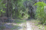 Long Trail Leading Through Many Trees at Chinsegut Wildlife and Environmental Area