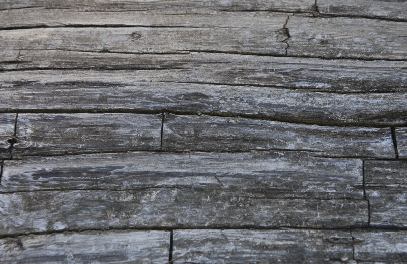 Longitudinal and Lateral Cracks in Dead Wood