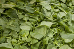 Loose Spinach Leaves for Sale at Haymarket Square