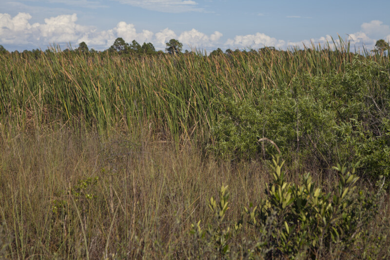 Low-Lying Shrubs and Grasses at the Big Cypress National Preserve