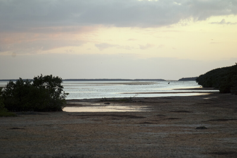 Low Tide at Snake Bight