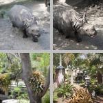 Lowry Park Zoo photographs