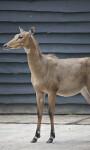 Mammal Standing on Hard Floor at the Artis Royal Zoo