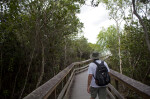 Man Walking on a Boardwalk at Pa-hay-okee Overlook of Everglades National Park