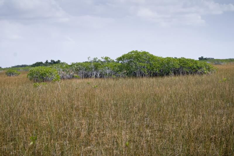 Mangrove Cluster