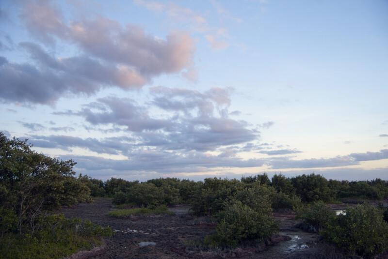 Mangrove Clusters