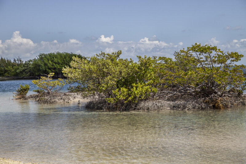 Mangrove Island at Biscayne National Park
