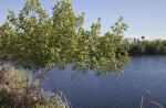 Mangrove Near Waterway at Big Cypress National Preserve