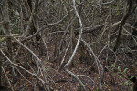 Mangrove Roots at West Lake of Everglades National Park