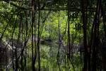 Mangrove Tunnel on Halfway Creek in Everglades National Park