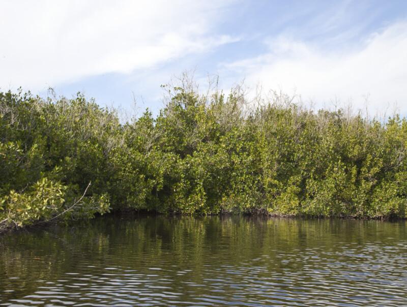 Mangroves Against the Sky