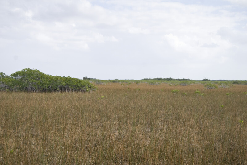 Mangroves and Sawgrass