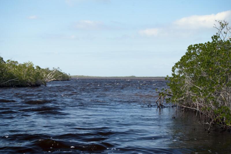Mangroves at Coot Bay