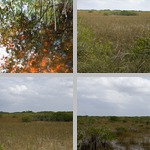 Mangroves photographs