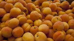 Many Apricots on Display at Haymarket Square