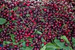 Many Cherries on Display