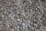 Many Seashells at Biscayne National Park