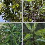 Marlberries photographs