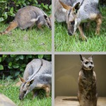 Marsupials photographs