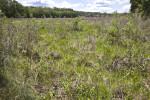 May's Prairie at Chinsegut WEA