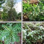 Medicinal Plants photographs