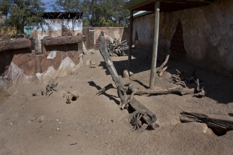 Meerkat by Hole