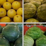 Melons photographs