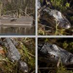 Merrit Island National Wildlife Refuge photographs