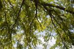 Mesquite Tree Branches
