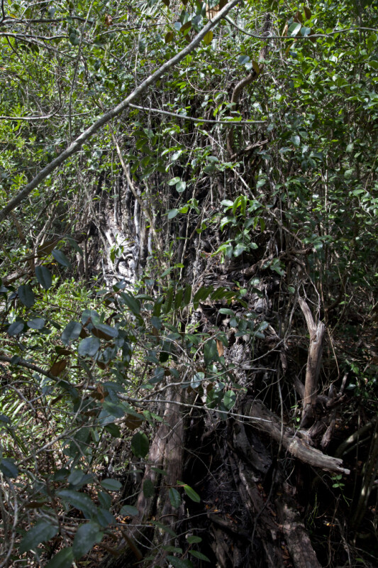 Mess of Branches, Trunks, and Leaves