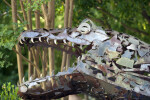 Metal Tyrannosaurus rex Head at the Sacramento Zoo