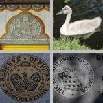Misc Animal Photos photographs
