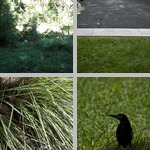 Misc Grasses photographs