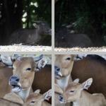 Misc Mammals photographs