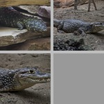 Misc Reptiles photographs